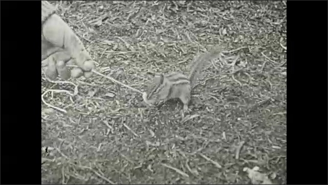1930s: Chipmunk eats nut attached to string that person is holding in hand.