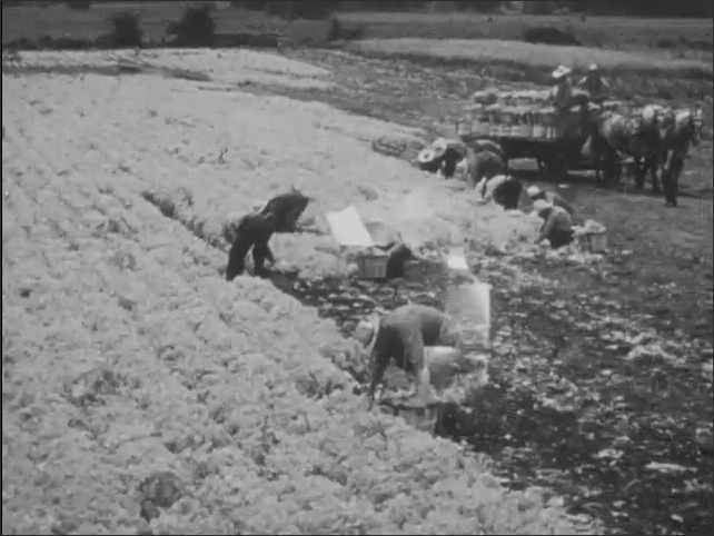 1940s: Farm workers pick cotton. Sparks fly in an iron works. A ship sails in a port.