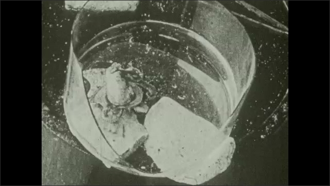 1930s: Title card. Octopus in container.