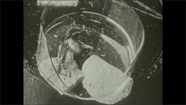 1930s: Person prods at octopus in tank.