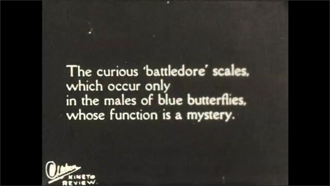 1930s: UNITED STATES: scales on wing of Peacock butterfly. Battledore scales on male butterfly. Butterfly eye