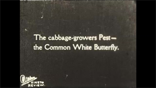1930s: UNITED STATES: man polishes shoes with brushes. Brushes fit together. Diagrammatic section through butterfly tongue. Common White butterfly on flower. Camouflaged moth.