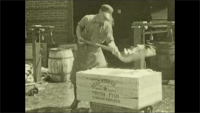 1930s: Man walks back and forth from warehouse with shovel full of ice. Man shovels ice into crate of fish. Man hammers nails into lid of crate. Man seals fish crate.