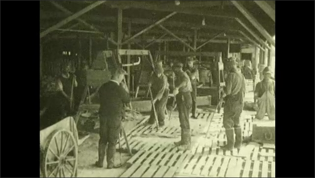 1930s: Men on dock dump basket of salt cod onto warehouse floor. Workers use forks to move cod from floor to scale. Workers use forks to move cod from scale bucket to brine tub.