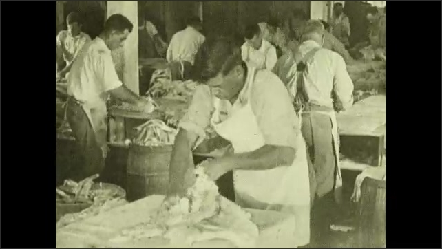1930s: Men prepare cod and halibut in warehouse. Man fillets halibut and removes skin.