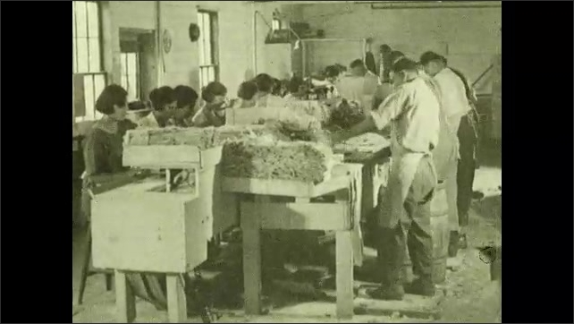 1930s: Women debone fish fillets in warehouse. Men slice fish fillets into chunks. Men and women prepare fish fillets at large table in warehouse. Women pack fish chunks into cans.