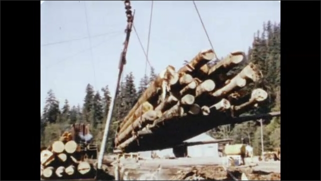 1950s: Logging truck drives through forest loaded with logs. Large load of logs is hoisted with cables onto train car.