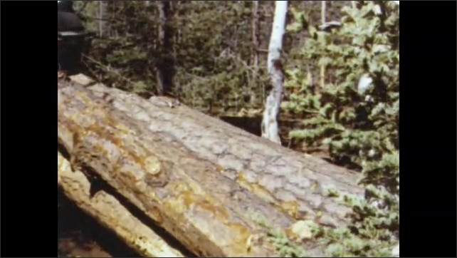 1950s: Evergreen forest, heavy logging equipment drags logs away, sets them down. Lumberjack handles cables and hooks.