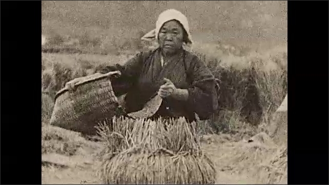 1930s: ASIA: lady works in field. Workers harvest crops. In China title. Ladies beat grain from crops