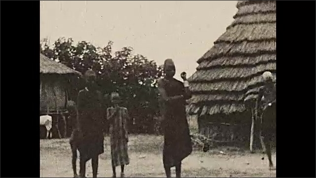 1930s: AFRICA: grasslands between the jungle and the Sahara. View through bush. Cattle keepers of upper Nile. Cow and goats by wooden hut