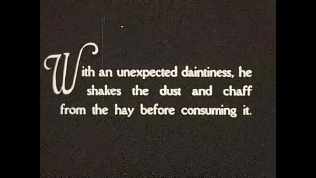 1930s: Elephants graze on grass and leaves. Intertitle card.