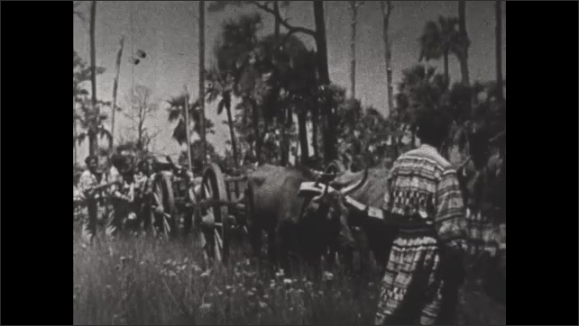 1930s: Seminole Indian caravan walk through wetlands with ox carts. Text on screen. Fires burn in the night at Seminole Indian village.