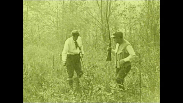 1930s: Two men carry rifles and walk with dogs in the middle of a field with high grass, they look around the grass, trees in the background.