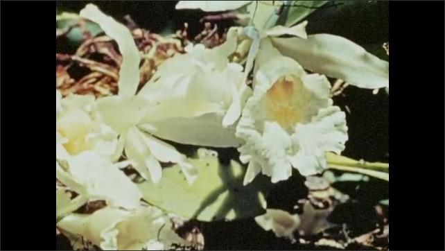 1940s: Men walk through jungle.  Flower.