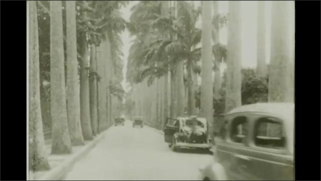 Rio de Janeiro 1930s:  palm tree lined street and cars.  Car drives along road. Avenida Rio Branco