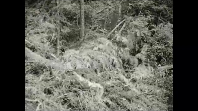 1930s: Machine drags log down hill.