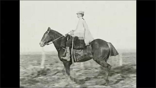 1930s: Man on horseback herds cattle.