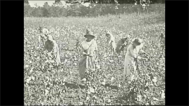 1930s: Family outside of farmhouse.  Women work in field.