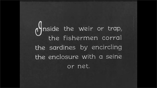 1930s: CANADA: fishermen pull rowing boats towards weir. Fishermen encircle sardines with net. Fishermen with sein. Fishermen purse net.
