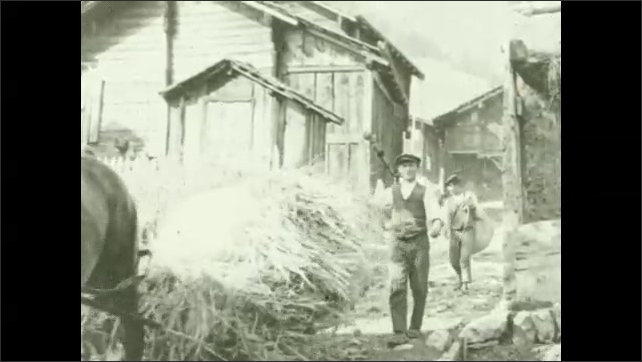 1930s: UNITED STATES: villagers gather hay. Horse pulls hay through streets. Man lifts hay onto shoulders.