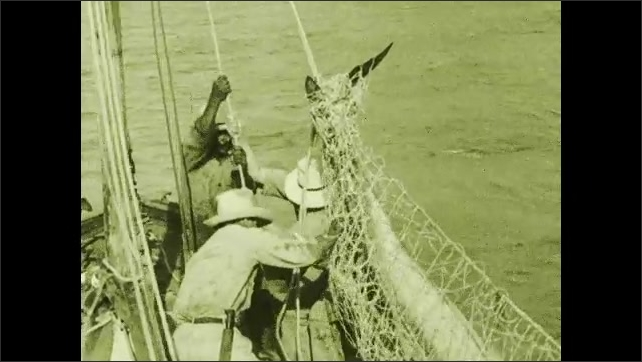 1930s: Men pull net out of water.