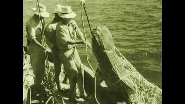 1930s: Men pull rope. Shark lifts out of water.