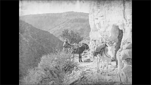 1930s: Burros loaded with supplies walk up dirt road driven by a man.