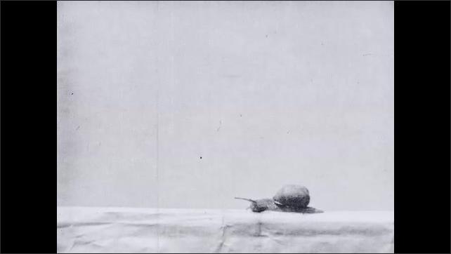 1930s: Snail crawls along.