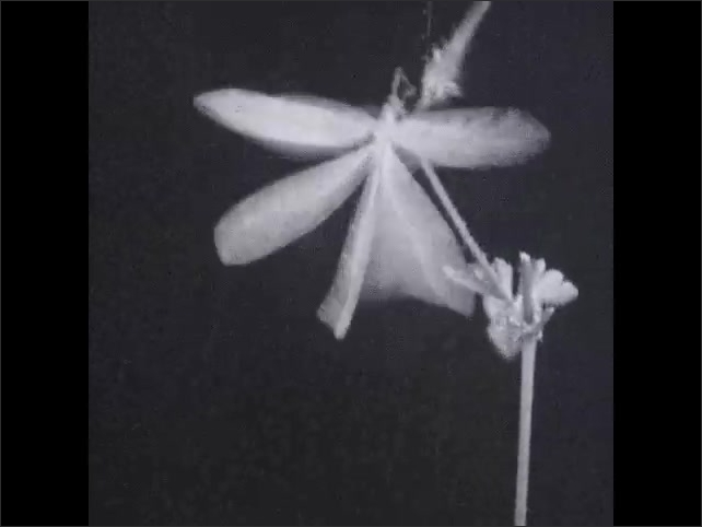 1930s: Insect flies from plant. End title. .