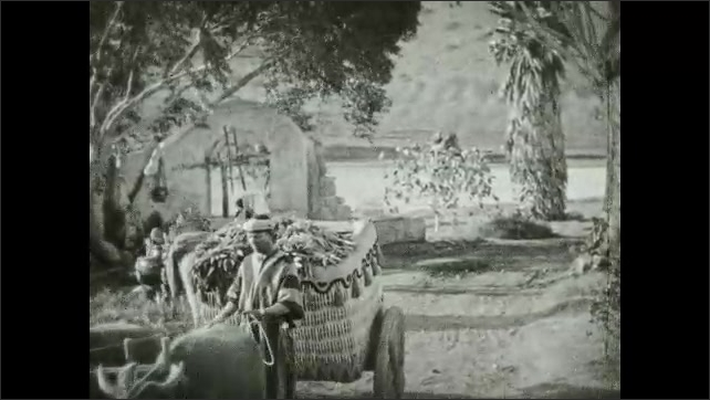1930s: UNITED STATES: man with donkey. Oxen pull cart. Man in field