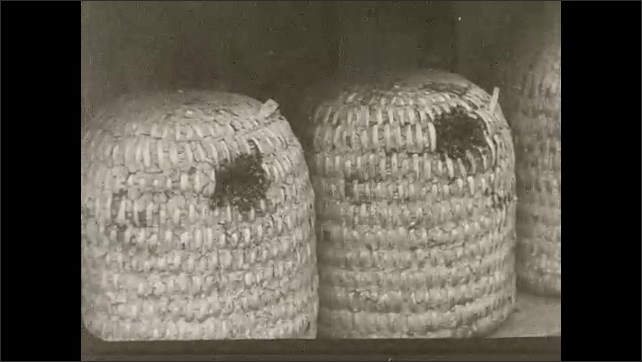 1930s: Bees fly in and around entrances to hive baskets in bee house. Bees climb over honeycomb in hives.