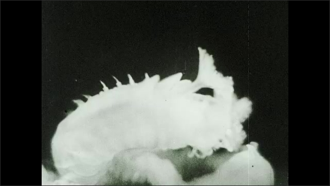 1930s: UNITED STATES: Sea worm with fan shaped tentacles for catching food.
