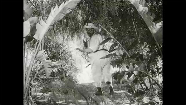 1930s: Men look around jungle. Man with gun runs through jungle.