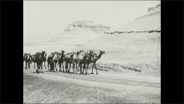 1930s: People herd camels down desert road.
