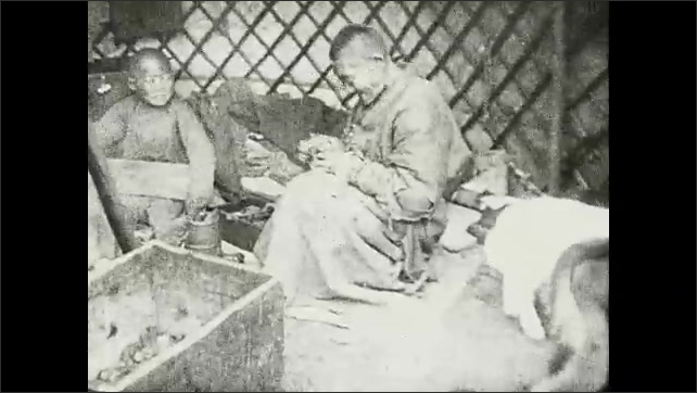 1930s: People and animals sit inside hut surrounding fire in center. Some are drinking and some are eating. Calf's are tied up inside.