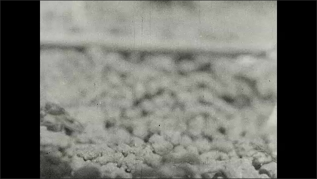 1930s: Ants walk in and out of hole.  Ants carry sticks and leaves.  Ants climb tree.