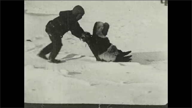 1930s: A child pushes other child with sled in snow. Title card. Child holds puppy in snow.
