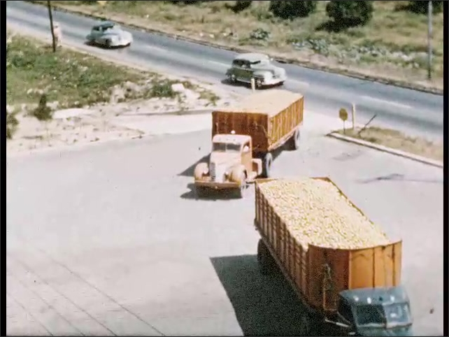1950s: Oranges fall from conveyor belt into truck. The truck drives away. Two trailer trucks full with oranges arrive at parking lot. Man looks at truck that unloads oranges onto a conveyor belt.