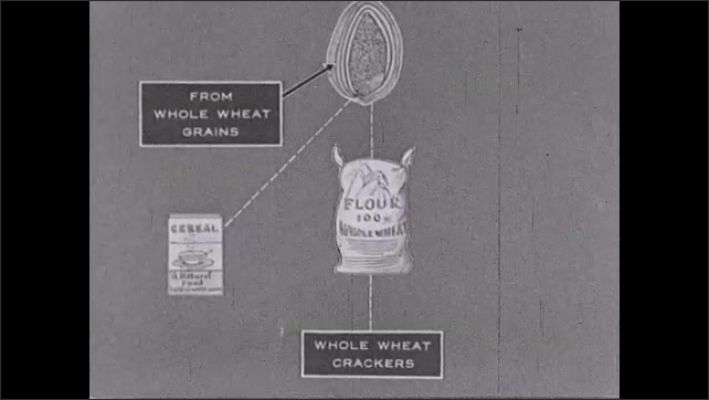 1930s: Miller rubs flour in his hand. Diagram of wheat kernel leading to cereal, flour and crackers. Intertitle about cracker factory.