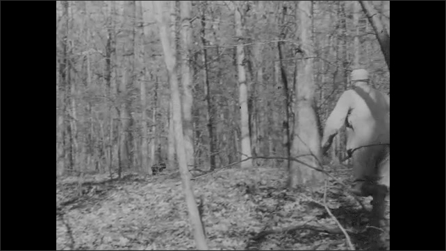 1930s: man following a turkey through underbrush scares it and it flies away, man uses turkey call