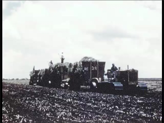 1950s: Farmland. Machines harvest crops as workers stand in machines moving crops around.