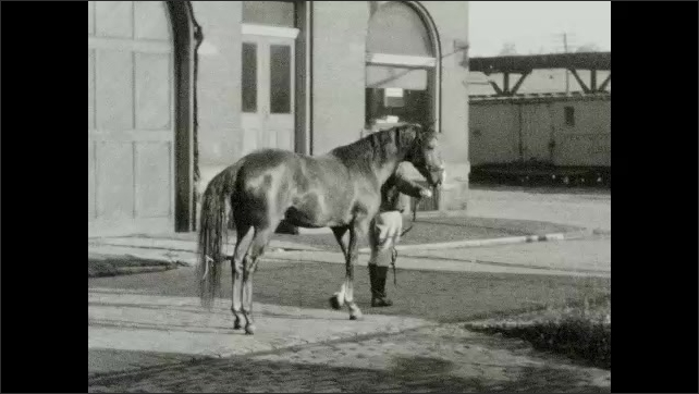 1940s: Man holds horse by the reins, they stand and wait. Man walks horse in courtyard, holds it by the reins. Man who wears hat and tie walks horse into a horse transporter.
