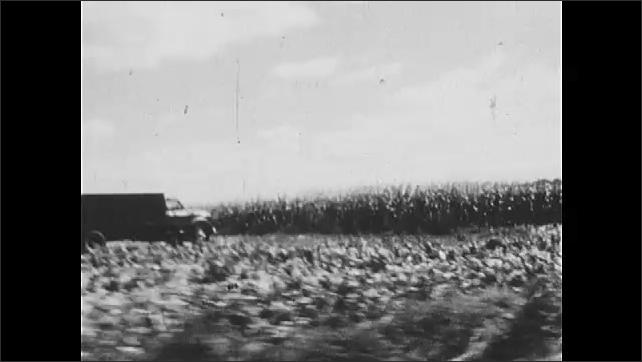 1970s: Tobacco fields. Apples roll across conveyor belt.