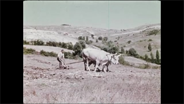 1970s: Mountains.  Valley.  Oxen pull plow.  Farmer works in field.