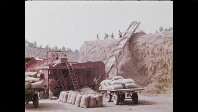 1970s: Crops in field.  Conveyor belt carries hay to top of huge pile.  Men work.