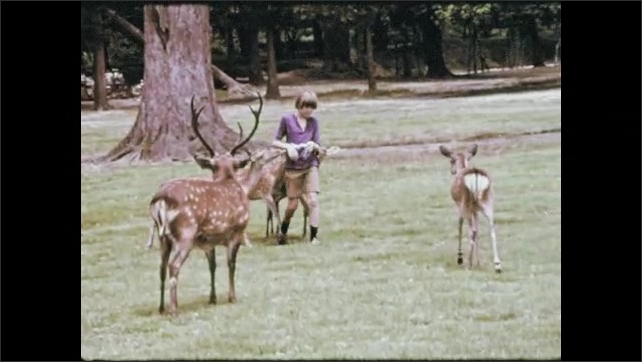 1970s:Young American boy feeds and is chased by deer on the Kasuga temple grounds. Japanese children run from the deer. Young American boy feeds deer on the Kasuga temple grounds