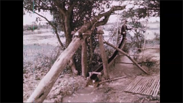 1970s: Man operates elaborate irrigation device. Man uses wooden irrigation device to transfer water from river to paddy.