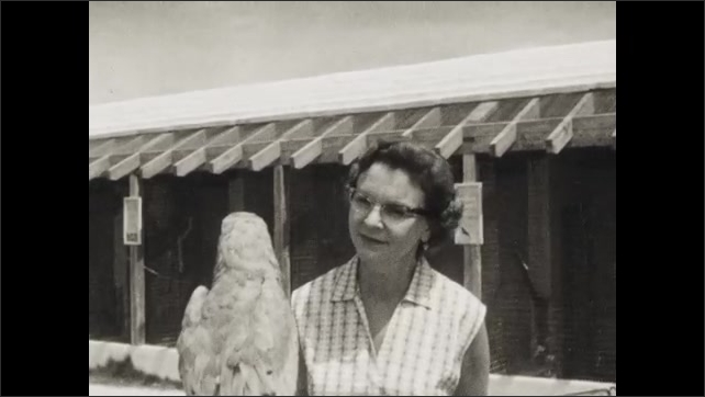 1950s: Man and woman talk to a parrot in the zoo.