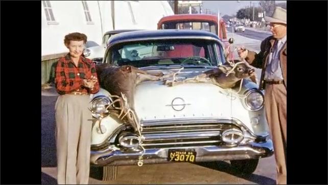 1950s: UNITED STATES: men show off dead deer on bonnet of car. Men lift up heads of dead deer. Deer tied to bonet of car