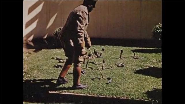 "1940s South Africa: Text describes ""Port Elizabeth's huge snake farm.""  Man uses stick to tease deadly snakes.  Man picks up snakes."
